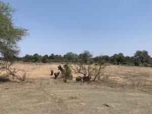 Éléphants dans la rivière asséchée